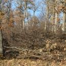 Подпомагане естественото възобновяване чрез изсичане на подлеса и храстите - след проведеното мероприятие