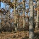 Подпомагане естественото възобновяване чрез изсичане на подлеса и храстите - след проведеното мероприятие - изсичане на подлеза