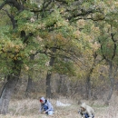 Събиране на дъбов жълъд от регистриран източник