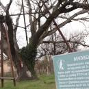 Най-старото дърво в България - Гранитският дъб